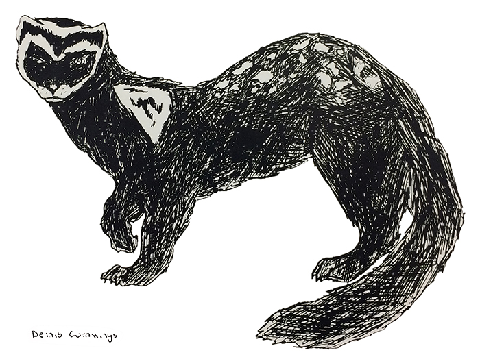 Black and white illustration of the ferret mascot from a yearbook. The mascot appears to have been drawn in pencil or ink and the artwork was signed by Denis Cummings.